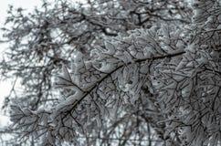 De tak van de winter met sneeuw royalty-vrije stock foto's