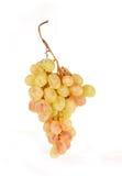 De tak van druiven Royalty-vrije Stock Afbeelding