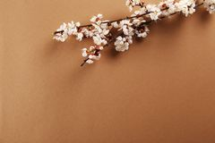 De tak van de fruitboom met het verse bloeien stock afbeelding
