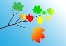 De tak van de de herfstesdoorn Stock Illustratie