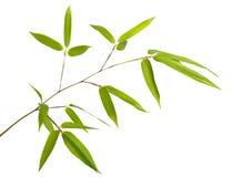 De Tak van het bamboe stock foto