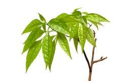 De tak van het blad en van de boom Stock Fotografie