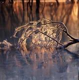 De tak van het ijs in de bevroren rivier Royalty-vrije Stock Afbeeldingen