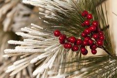 De Tak van Kerstmis Stock Afbeeldingen