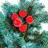 De tak van de Kerstmisspar met rode die decoratie op wit worden geïsoleerd Stock Foto's