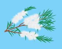 De tak van Melaleuca van de theeboom vector illustratie