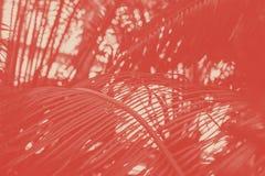De tak van palm met smalle parallel verlaat diaginally neiging op het langwerpige harizontal schot Op de achtergrond van stock afbeeldingen