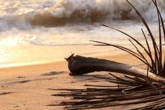 De tak van de palm op strand Royalty-vrije Stock Foto's