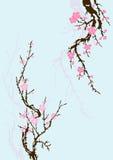 De tak van Sakura met bloemen Royalty-vrije Stock Afbeelding