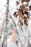 De tak van de vrouwenholding met bladeren met sneeuw in bos worden behandeld dat stock foto