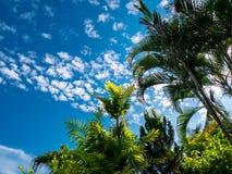 De tak van de zomer met blauwe hemel en wolken Copyspace royalty-vrije stock foto