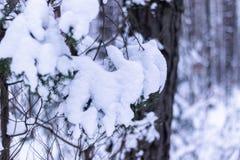 De tak wordt behandeld door sneeuw royalty-vrije stock foto's