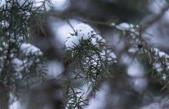 De tak wordt behandeld door sneeuw stock fotografie