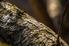 De takachtergrond van de Hd Bosboom Stock Foto's