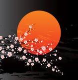 De takjes van de kers in bloei Stock Foto