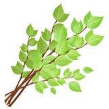 De takken met groene bladeren. Royalty-vrije Stock Foto