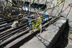 De takken met jonge bladeren groeien door het rooster royalty-vrije stock fotografie
