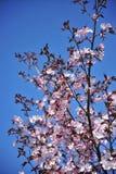 De takken tegen een heldere blauwe hemel kijken verbazend stock fotografie