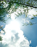 De takken van bamboe tegen hemel in zonlicht Royalty-vrije Stock Afbeelding
