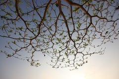 De takken van bomen en de donkere hemel en de zonneschijn Royalty-vrije Stock Foto
