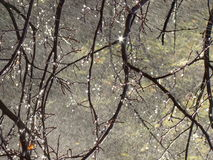 De takken van bomen glanzen Stock Foto