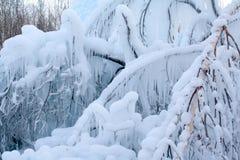 De takken van bomen zijn behandeld met ijs Stock Foto's