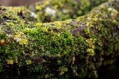 De takken van de bomen zijn behandeld met mos, paddestoelen in de de lente bosmacro Royalty-vrije Stock Foto's