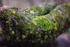 De takken van de bomen zijn behandeld met mos, paddestoelen in de de lente bosmacro Stock Foto's