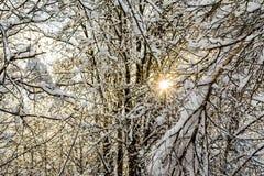 De takken van bomen zijn behandeld met sneeuw, voorbij de bomen van het dichte bos kunt u de het plaatsen zon zien Stock Fotografie