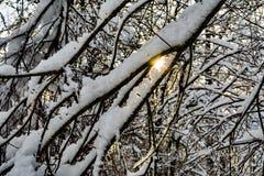 De takken van bomen zijn behandeld met sneeuw, voorbij de bomen van het dichte bos kunt u de het plaatsen zon zien Royalty-vrije Stock Foto's