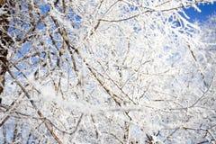 De takken van de bomen zijn in vorst Royalty-vrije Stock Foto