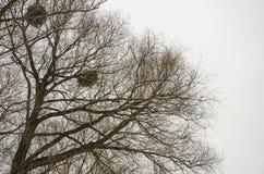 De takken van bomen zonder bladeren Stock Afbeelding