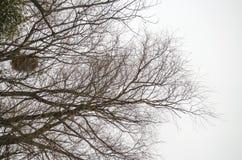 De takken van bomen zonder bladeren Royalty-vrije Stock Afbeeldingen