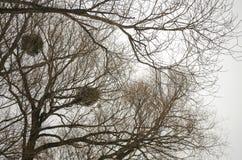 De takken van bomen zonder bladeren Stock Afbeeldingen