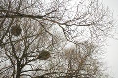 De takken van bomen zonder bladeren Stock Foto