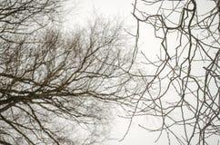 De takken van bomen zonder bladeren Royalty-vrije Stock Afbeelding