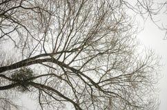 De takken van bomen zonder bladeren Royalty-vrije Stock Foto