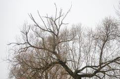 De takken van bomen zonder bladeren Royalty-vrije Stock Foto's