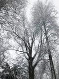 De takken van de boom die met sneeuw worden behandeld royalty-vrije stock fotografie
