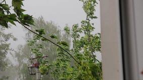 De takken van de boom tijdens een sterke orkaan buigen en vallen direct in het venster van de flat Zware regen Het onweer stock videobeelden