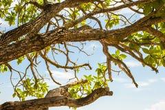 De takken van boombladeren met oceaanlaagmening op de achtergrond Royalty-vrije Stock Foto's