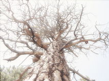 De Takken van de boom Stock Afbeeldingen