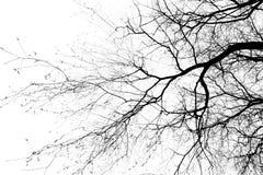 De takken van de boom Stock Foto's