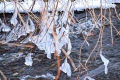De takken van de boom bevriezen in de de winterrivier Stock Afbeeldingen