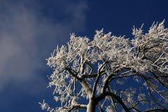 De Takken van de boom die met Ijs worden behandeld. Royalty-vrije Stock Afbeelding