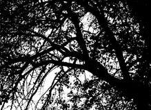 De takken van de boom met bladeren met bewolkt Royalty-vrije Stock Afbeelding