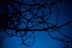 De takken van de boom met bladeren met bewolkt stock foto's