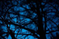 De takken van de boom met bladeren met bewolkt royalty-vrije stock foto