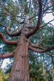 De takken van de boom met bladeren met bewolkt Royalty-vrije Stock Afbeeldingen