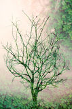 De takken van de boom met bladeren met bewolkt Stock Foto